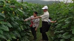 Yên Thủy (Hòa Bình): Hóa giải thách thức trong dồn điền đổi thửa