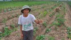 Thái Bình: Nông dân cay đắng khi ớt chết không rõ nguyên nhân