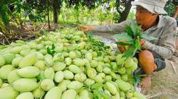 Mỗi năm thất thoát 4,2 triệu tấn rau quả sau thu hoạch