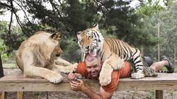 Ăn, ngủ, chơi bi-a... cùng 14 con hổ, sư tử