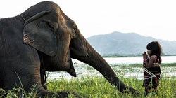 """Biệt tài """"dạy"""" voi của cô bé Việt 6 tuổi gây sửng sốt trên báo Anh"""
