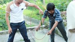 Nghệ An: Dân đổ xô đi săn rắn lục đuôi đỏ