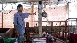 CỰC LẠ: Lão nông ở Vĩnh Long và đàn lợn lớn nhanh nhờ nghe... radio