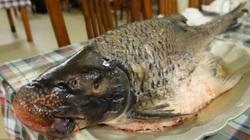 """Cá Anh Vũ """"Văn Lang đệ nhất ngư"""" 5 - 7 kg: Đặc sản tiến vua không tưởng"""
