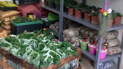 Bán hạt giống hoa kiếm tiền triệu mỗi ngày