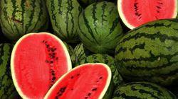1001 cách làm ăn: Trồng dưa hấu cho tết