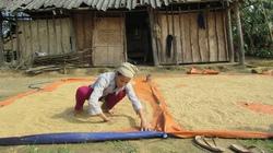 Xã Tân Trường (huyện Tĩnh Gia, Thanh Hóa): Người Thái mãi nghèo