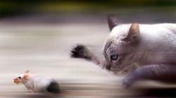 """Tranh luận """"nảy lửa"""" bài toán hại não: Mèo hay chuột chạy nhanh hơn"""