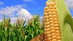 Ngày 1.12, tọa đàm trực tuyến về cây trồng biến đổi gen trên danviet.vn