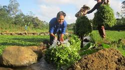 Trồng rau đặc sản từ nguồn nước giếng cổ nghìn năm tuổi