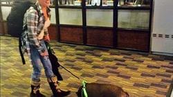 Nữ du khách bị đuổi cổ vì lợn cưng náo loạn máy bay