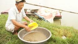 Hốt bạc với nghề nuôi trứng nước làm thức ăn cho cá