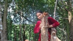 Cà Mau: Cán bộ bắt tay với lâm tặc phá rừng?