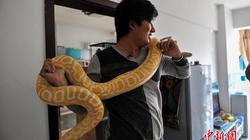 """Kỳ lạ người 10 năm """"sống chung"""" với trăn, rắn"""