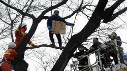 Xôn xao người đàn ông trèo lên cây để bán đấu giá thận