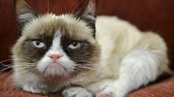 """Chú mèo có thu nhập """"khổng lồ"""" 2 nghìn tỷ đồng"""