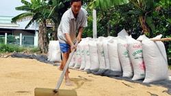 Ảm đạm thị trường lúa gạo