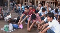 Phá trường gà lớn quy tụ người nghiện ở Sài Gòn