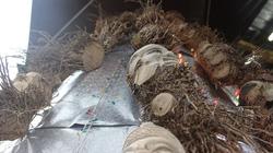 ĐỘC ĐÁO: Cây thông Noel phiên bản Việt lắp ráp từ hơn 200 gốc tre khắc hình