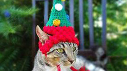 Rộ mốt sắm mũ Noel siêu đáng yêu cho… mèo