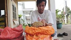 Huyện Châu Thành (Trà Vinh): Lúa giống bán trợ giá bị ẩm mốc