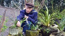 Lên Sapa ngắm vườn địa lan trăm triệu của người H'Mong