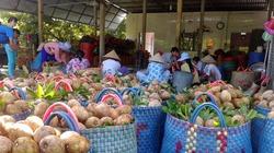 Cây hồng xiêm giúp hàng nghìn hộ dân thoát nghèo