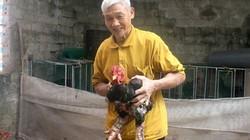Lão nông U80 đam mê giống gà quý bạc triệu