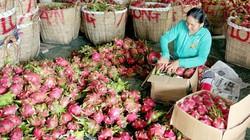 Hỗ trợ nhà nông liên kết sản xuất