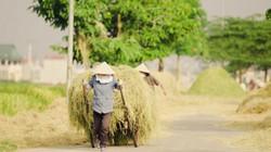 """Tìm về làng quê thanh bình với bộ ảnh """"Mùa gặt"""""""
