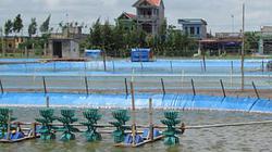 Không có tài sản thế chấp có được vay vốn nuôi trồng thủy sản?