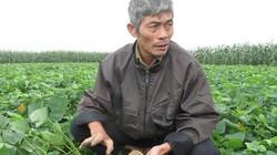 Thuê đất nông nghiệp phải có điều kiện gì?