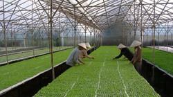 Nông nghiệp tiếp cận TPP bằng ứng dụng công nghệ cao