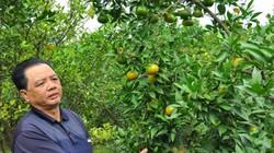 Hình thành nhiều vùng cây ăn quả đặc sản