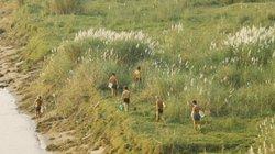Ảnh: Mùa cỏ lau thơ mộng dưới chân cầu Long Biên