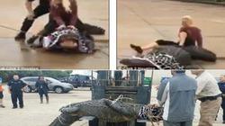 Mỹ: Cá sấu nặng hơn 4 tạ lang thang trên phố