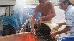 """Trung Quốc """"điều khiển"""" thị trường thủy sản Việt"""