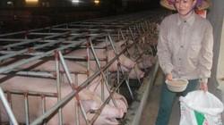 """""""Tuyên chiến"""" với chất cấm trong chăn nuôi"""