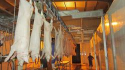 Mitraco đột phá phát triển chăn nuôi theo chuỗi