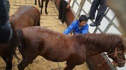 Theo vó ngựa hạ sơn