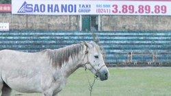 Vó ngựa khua vang miền Kinh Bắc