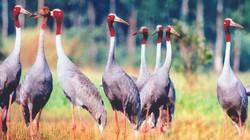 Tràm chim  vào mùa hội du lịch