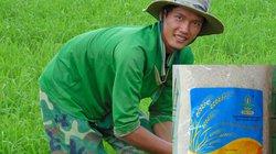 """Chàng trai bỏ phố về quê trồng lúa sạch, đưa """"nàng hoa"""" vươn xa"""