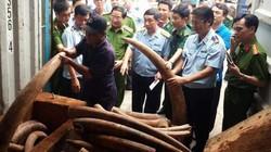 """Xem xét khởi tố vụ vận chuyển trái phép ngà voi """"khủng"""" ở TP.HCM"""