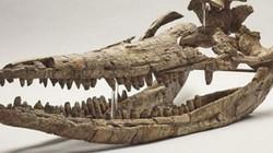 """Phát hiện hóa thạch """"rồng biển"""" thống trị đại dương kỷ Jura"""