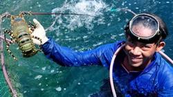 Lãi tiền tỷ mỗi năm nhờ nuôi tôm hùm, cá mú ở đảo Lý Sơn