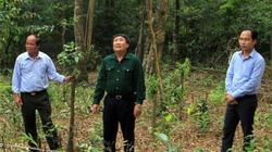 Quảng Trị giao, khoán bảo vệ rừng:  Lợi nhiều nhưng bất cập không ít