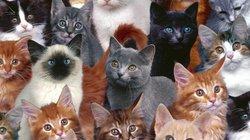 Mỹ: Hoảng hốt phát hiện xác 40 con mèo trong tủ lạnh