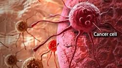 Nấm lim xanh và hiệu quả vượt trội trong phòng chống bệnh ung thư máu