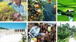 Tiếp sức cho nông nghiệp bằng khơi thông dòng tín dụng